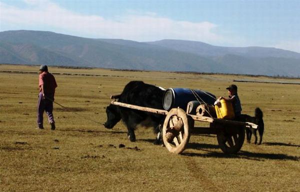 yak-cart.jpg