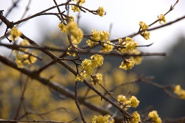 tzoumerka-03-2007-021.jpg