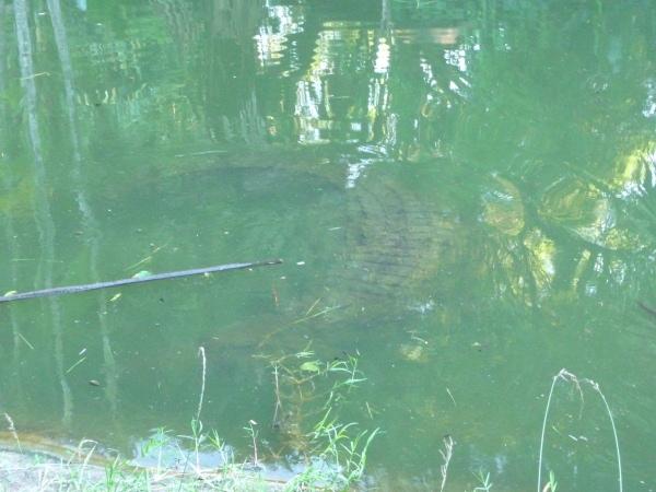 ο τρόμος κάτω απο το νερό